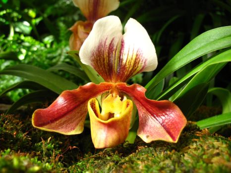 Freaky Orchid by cheep