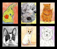 2018 CCEE Pet Sketches