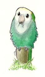 ANOTHER Lovebird by maggock