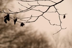 D'Autunno by Amersill