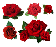 Roses Pack PNG Stock by Gilgamesh-Art
