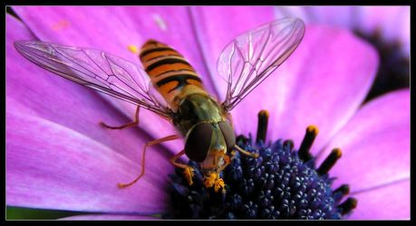 Insect at work by Goofy-Deluxe