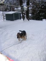 Jake outside in the snow by BlueIvyViolet