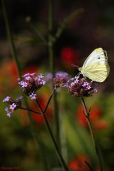 Flutterby by George---Kirk