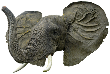 Elephant Head By Gd08 by gd08