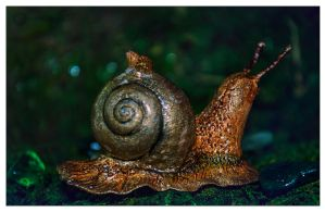 A Snail by erzsebet-beast
