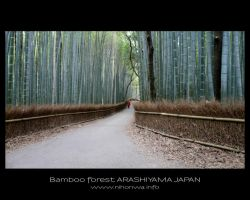 Bamboo forest -1- by Lou-NihonWa