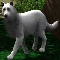 Sims 3 White Wolf by Hollena