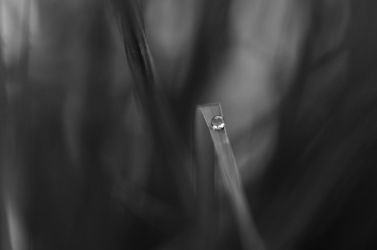 Rain Is Gone by Andruhastepanov