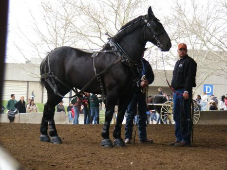 equine affaire 9 by jendee-stock