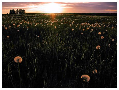 Field Of Dreams by DSent