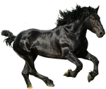 Black Horse PNG by LG-Design