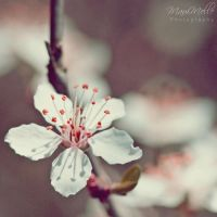 Happiness ~ by MelissaBalkenohl