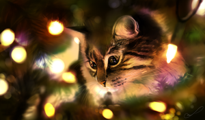 Christmas lights by Martith