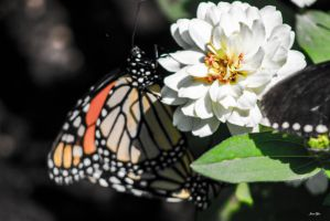 The flower and the butterly by JamesTyson