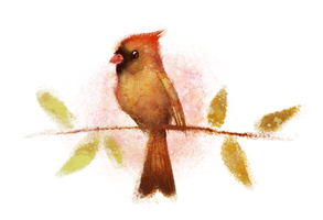 Female Cardinal by BriMercedes