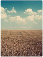 Gold Field by immortal91