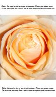 Heart of a rose by Mithgariel-stock