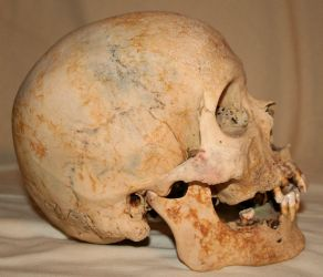 Skull Stock Photo 02 by Aleuranthropy