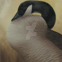 Canada Goose Study by ShaleseSands