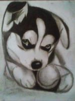 2013 drawing - puppy ^______^ by nielopena