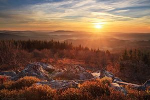 Golden Painting by FlorentCourty