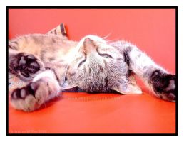 paws up by magur