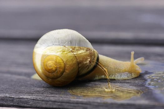 Half full snail by FotoNerdz