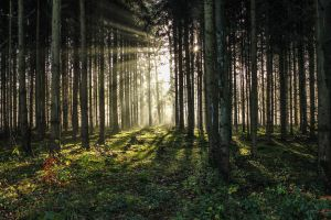 Forest 13 by landkeks-stock