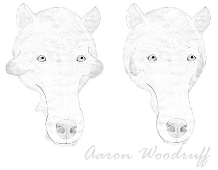 Sexual dimorphism in Archaeotherium by CenozoicKing