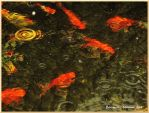 Ripples and Goldfish by Bonniemarie