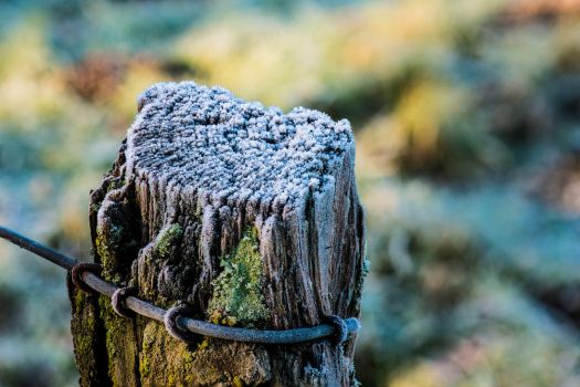 Frost-covered fence post by atomkat