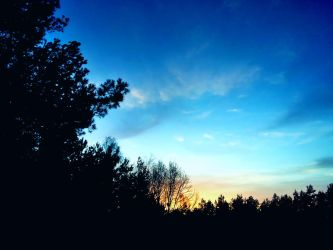Sky and trees by Allexiiale