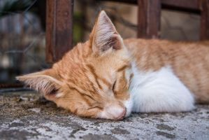 Cat by Goultard-AD