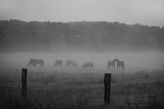 Horse Field at Dawn by Photoception