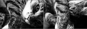 My cat by siliconperfection