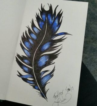 Feather - Sketchbook Practice by KleinerSchelm