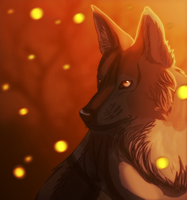 Coyote by VVulfy