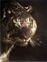 Scratch board tiger by pickledshoe