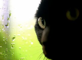 Olive in the Window by ju5tath0ught