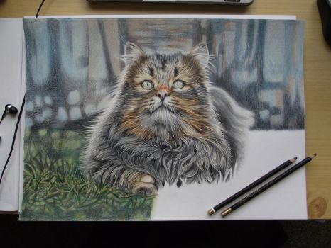 Curious cat - WIP IV. by Mishice