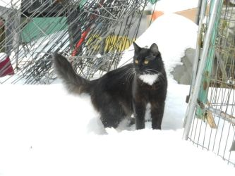 Artemis in snow day 2 16 by dottypurrs
