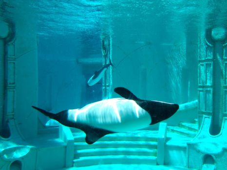Seaworld by Trisaw1