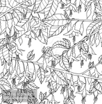Autumn - Fuscia (The Wild Colouring Book) by megcowley