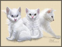 Whiskers on Kittens by 1skylight1