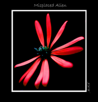 Misplaced Alien by tigertial8888