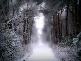 Stock: Winter snow in forest by needanewname