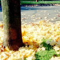 fall 2005 pdx by poofygoof