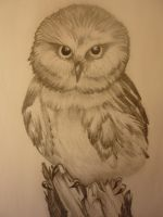 Baby Owl by Vto7x13