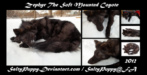 Zephyr the Black Coyote by SaltyPuppy